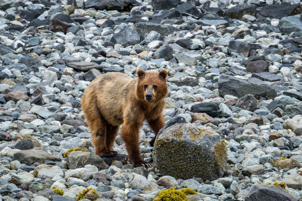 20160627-JI-Glacier Bay National Park-_DSF1838.jpg