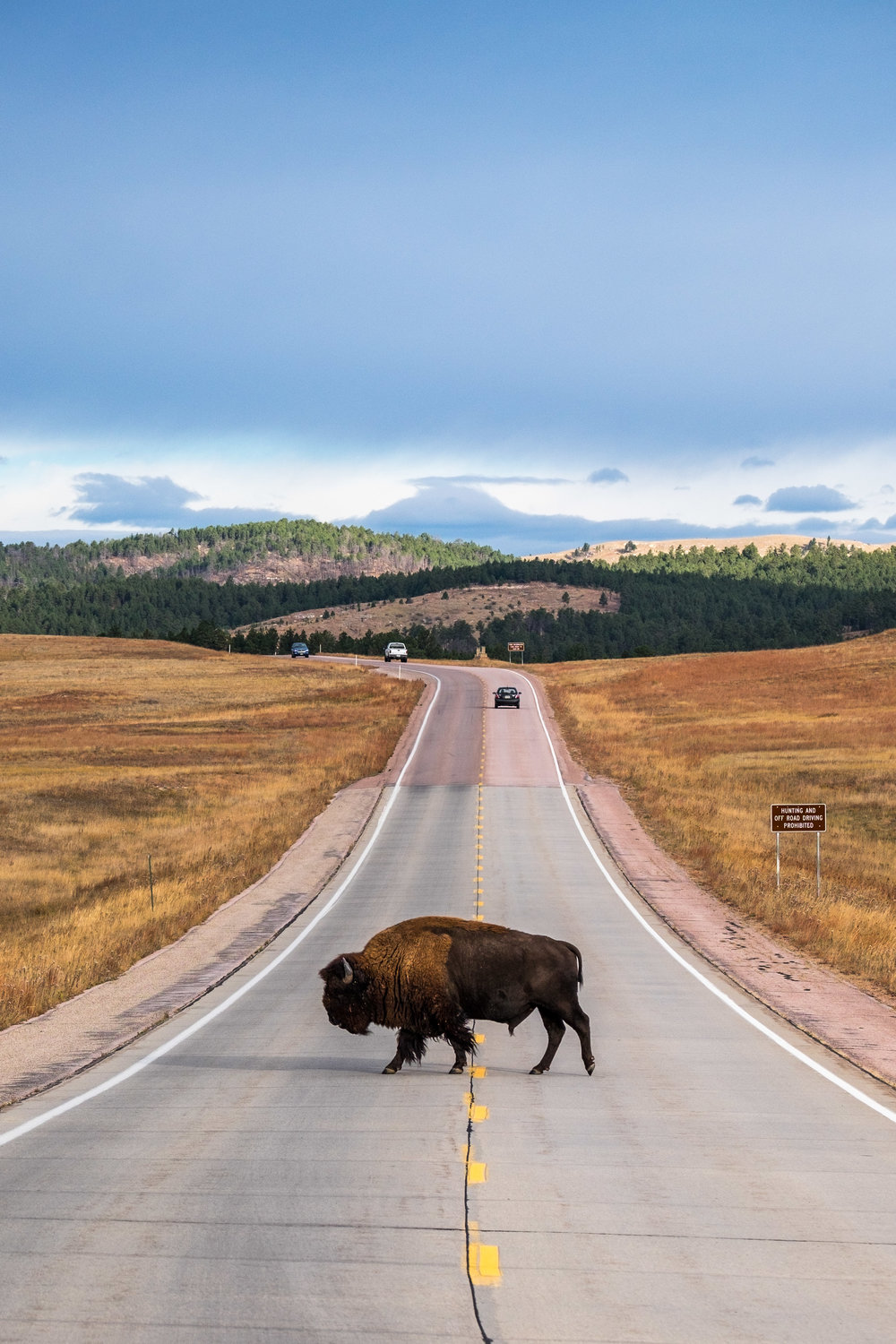 And they rule the road in South Dakota's Wind Cave too!