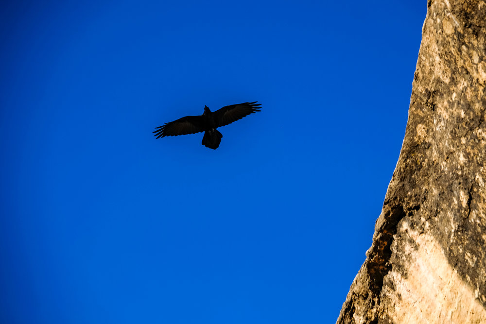 A raven flies overhead at Cliff Palace, said to be a good omen to natives in the area.