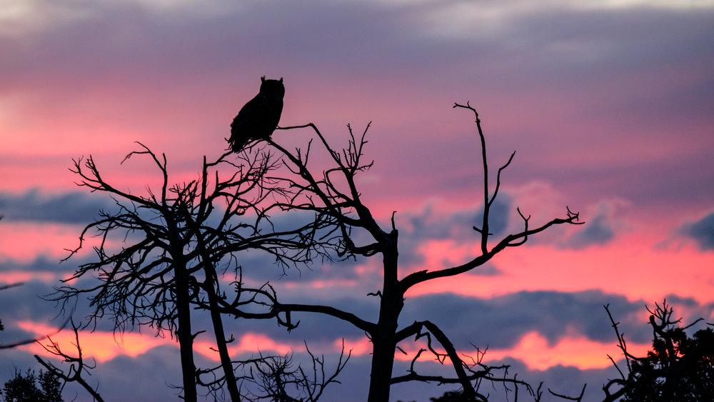 An owl at dusk.