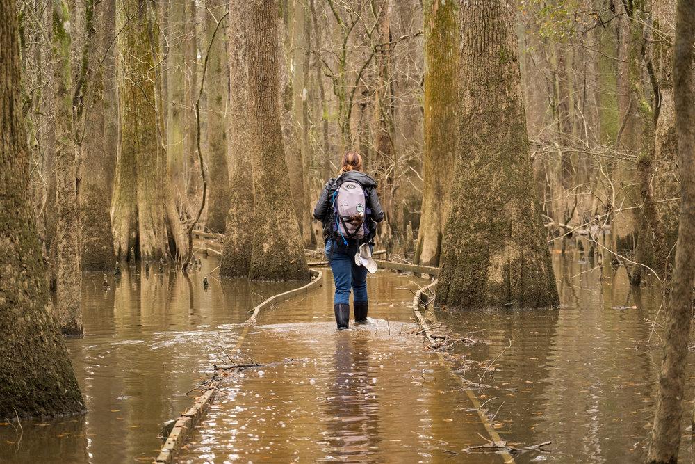 Walking through a flooded Congaree National Park in South Carolina.Credit: JONATHAN IRISH
