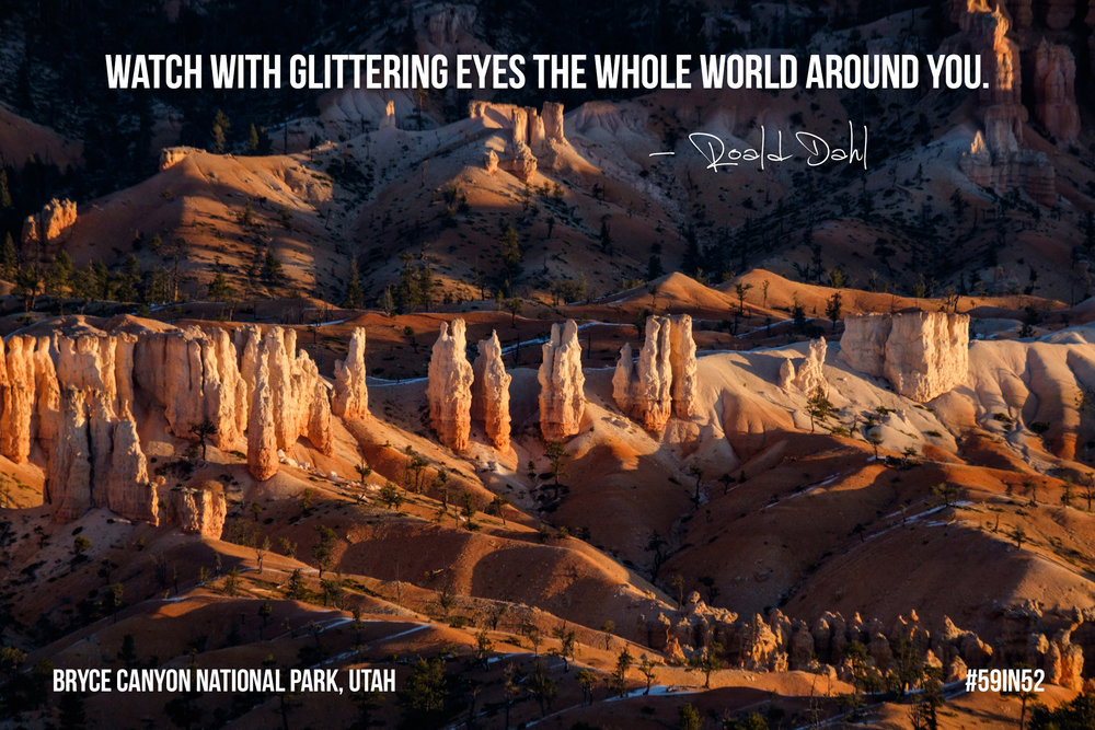 'Watch with glittering eyes the whole world around you...' - Roald Dahl