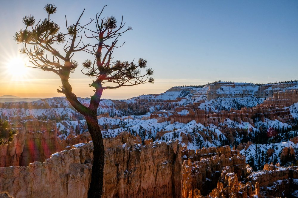 If you look closely, the hoodoos disappear to reveal many species of trees in this high-desert national park!