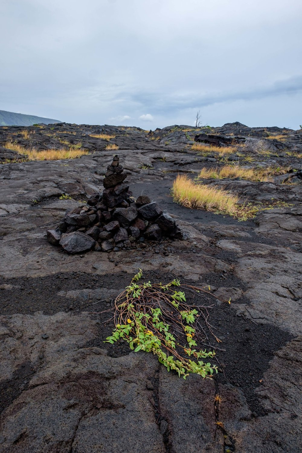 I took a hike out to see the Pu'u Loa Petroglyphs.