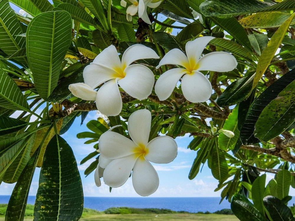 American Samoa National Park - 010.jpg