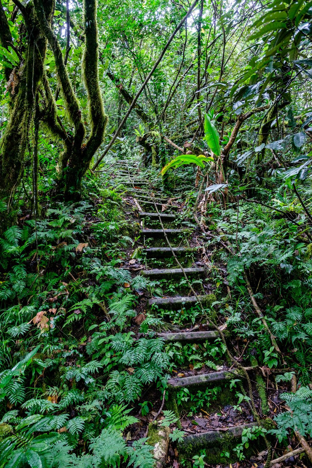"There are a total of 56 ""ladders"" and 786 steps up this trail to the top of Mount Alava. We got our workout for sure."