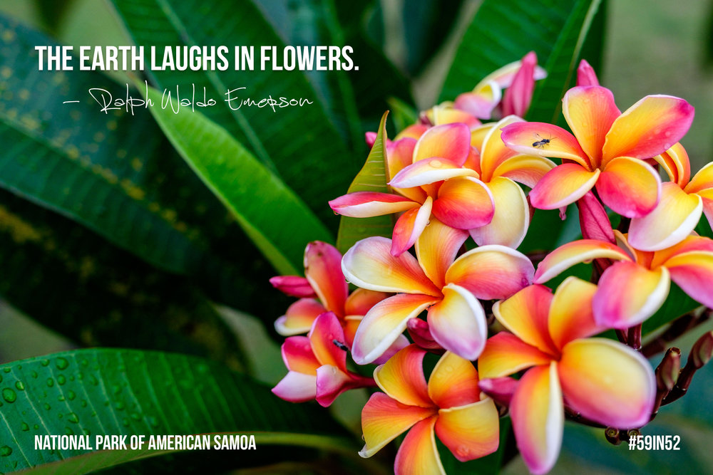 'The Earth laughs in flowers.' - Ralph Waldo Emerson