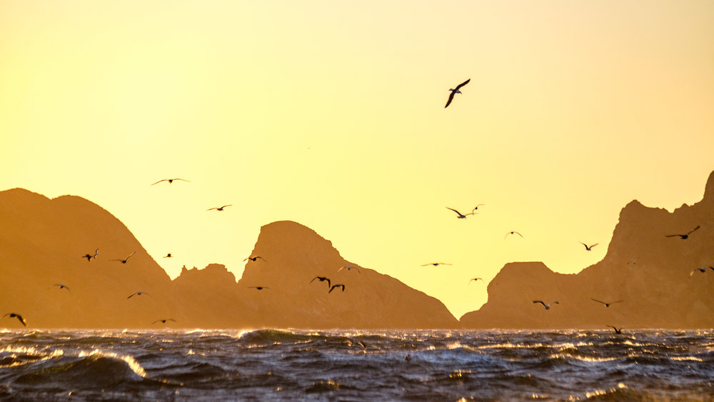 Birds soar in a golden sky in their wild habitat.