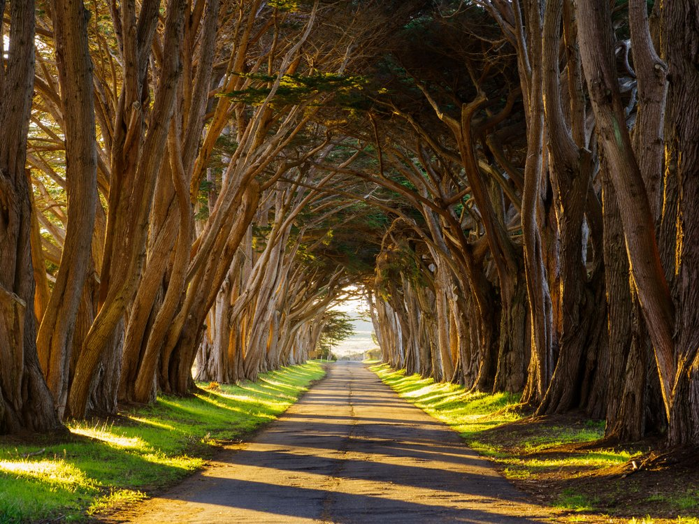 The Cypress Tree Tunnel at Point Reyes National Seashore, California | Photo by Jonathan Irish