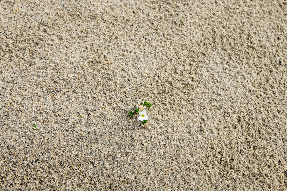Life in the Arctic dunes