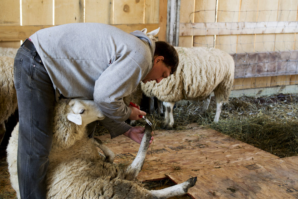 grassfed lamb