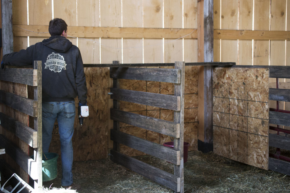 grassfed lamb Madison Wisconsin