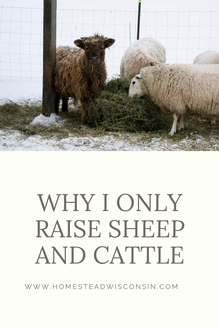 why raise sheep and cattle - wisconsin flerd