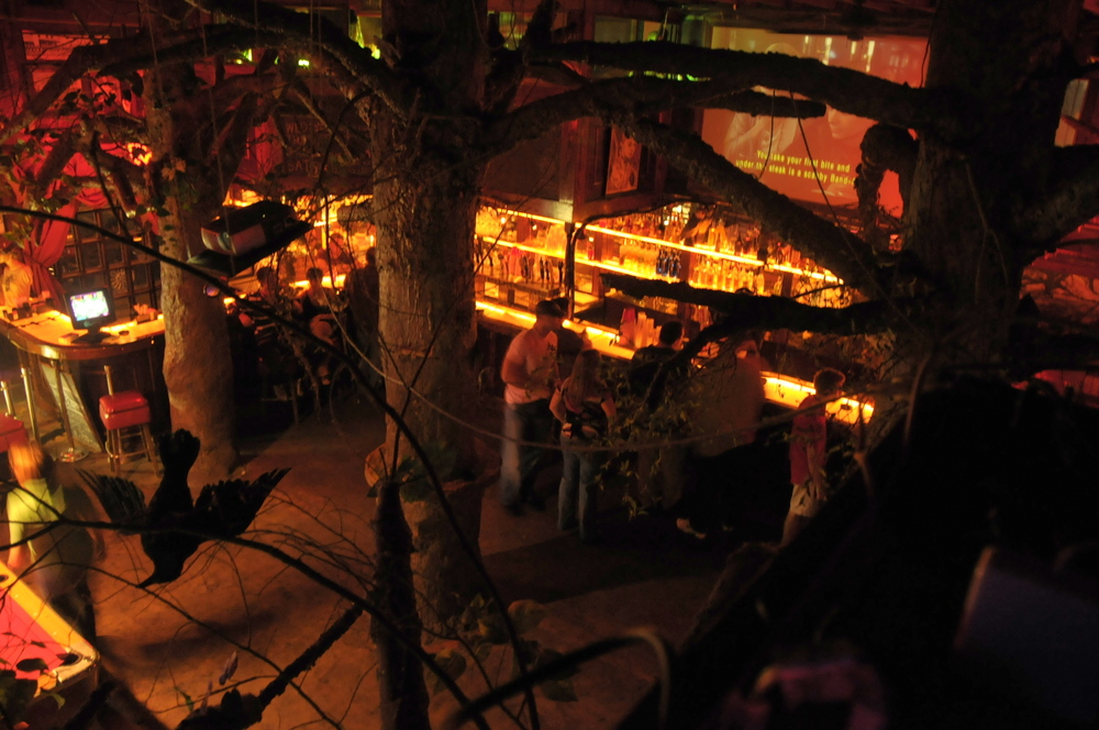 pearl bar high angle through trees.jpg
