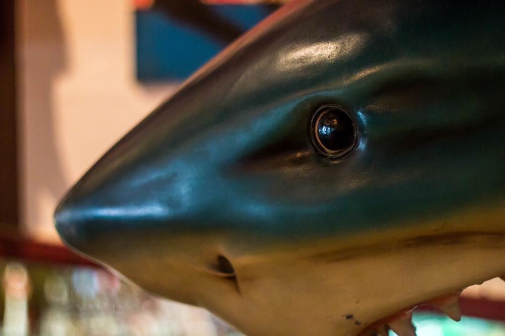 birdies shark (4).jpg