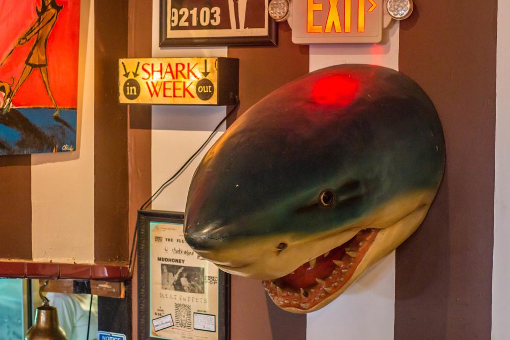 birdies shark (6).jpg