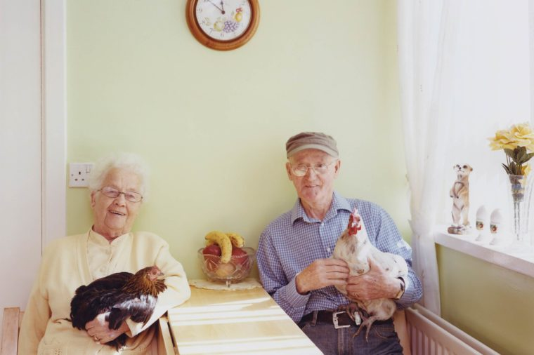 01-The-Surprising-Benefits-in-Keeping-the-Company-of-Hens-PHOTOGRAPHS-BY-JANE-HILTON-760x506.jpg