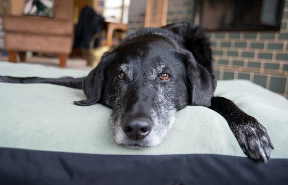 senior-dog-bed.jpg