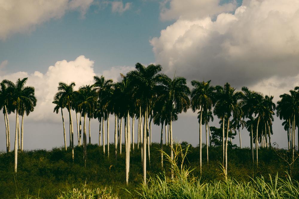 CUBA-5471.jpg