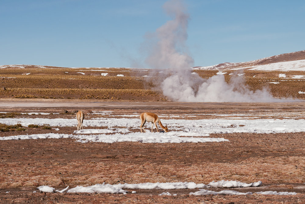 AtacamaDesert_KateBallis-4459.jpg