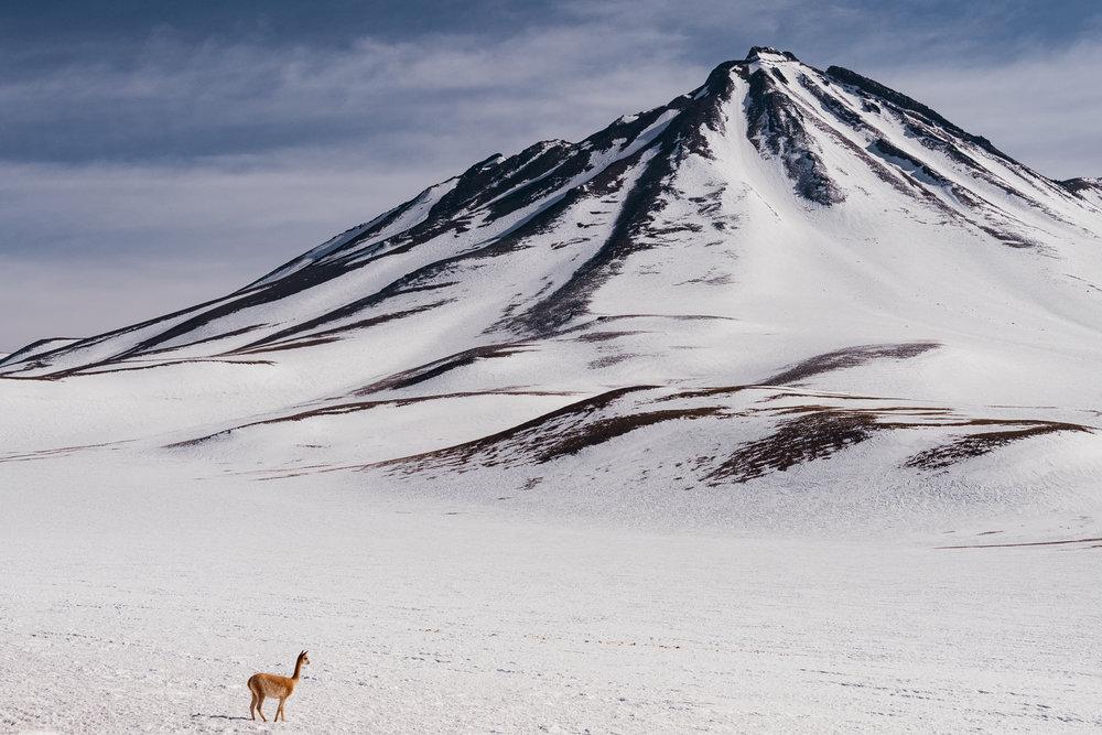 AtacamaDesert_KateBallis-4941.jpg