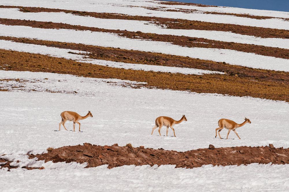 AtacamaDesert_KateBallis-4934.jpg