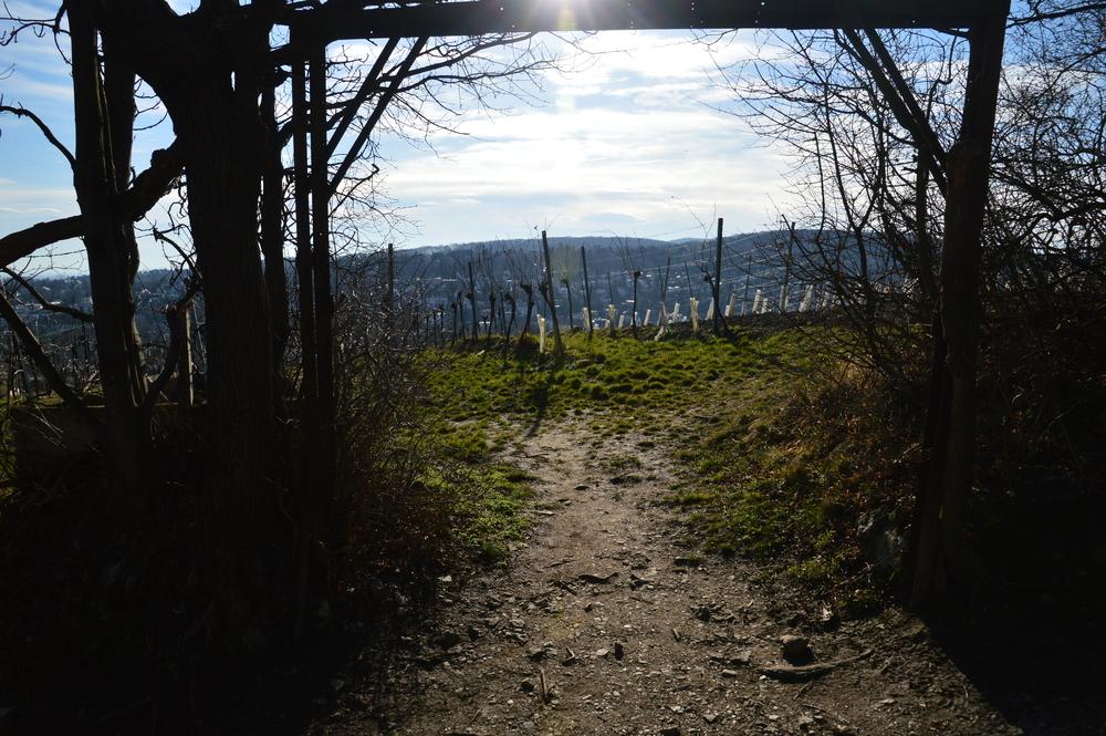 Hiking in Viennese Wine Yards (bonfiredream)