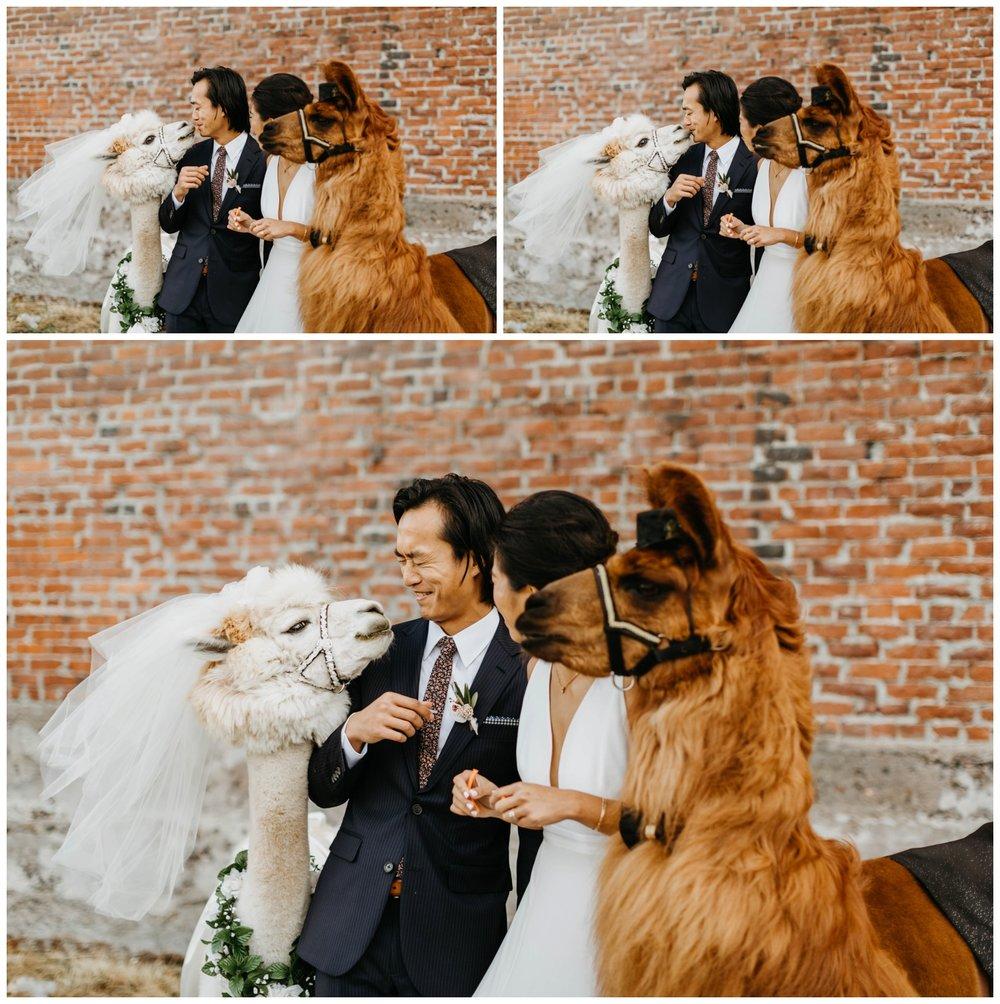 castaway_portland_wedding_jasminejphotography17.JPG
