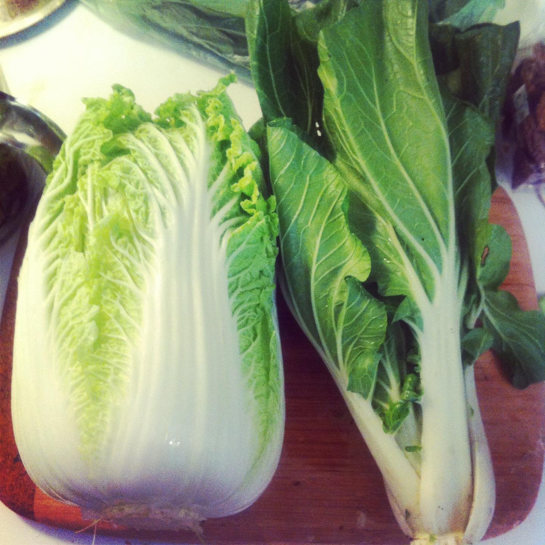 napa cabbage, bok choy