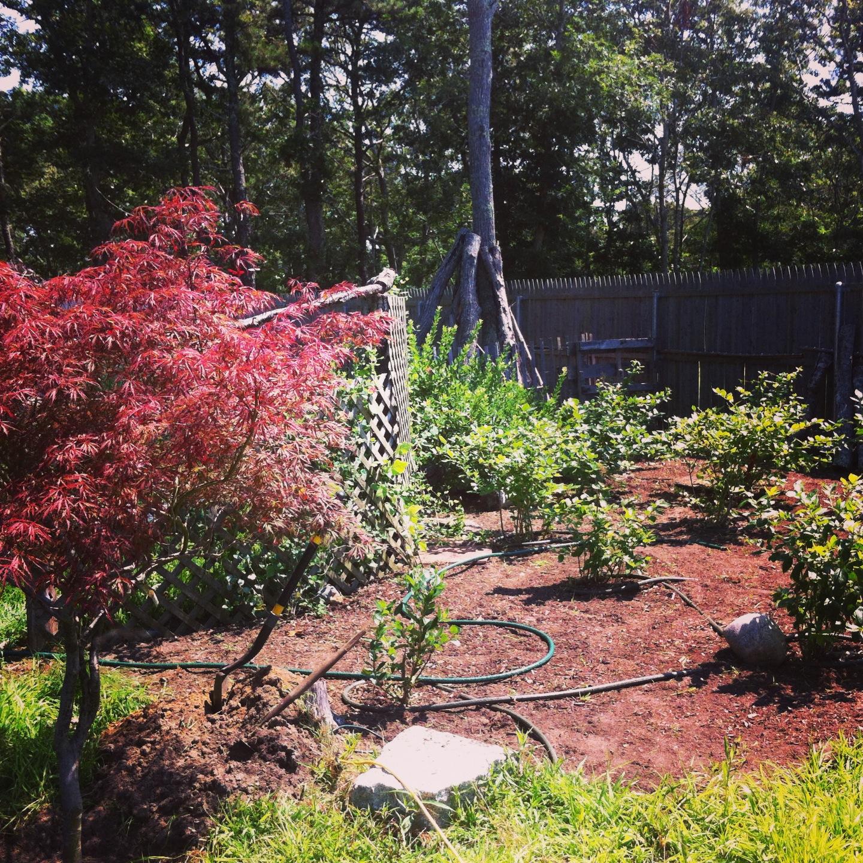 companion gardens