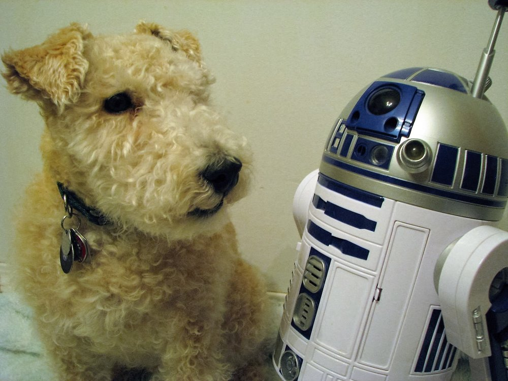 Maestro and R2-D2 were a unit when it came to waiting for students or demanding treats. Photo: R-M Arca.