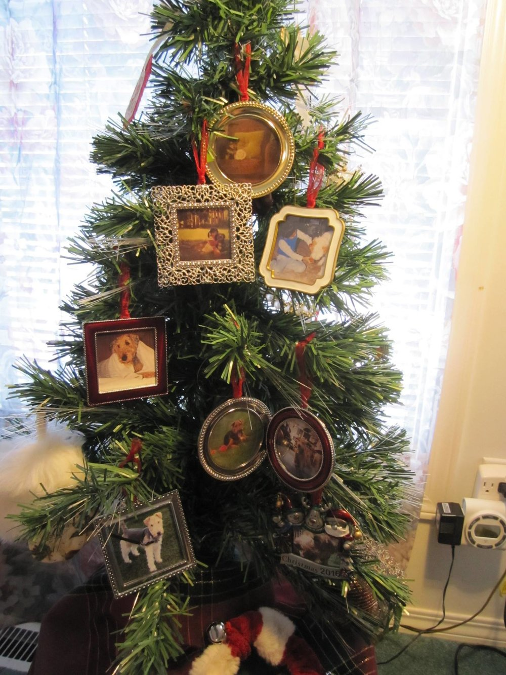 The Arca family dogs through the years, as shown on Maestro's tree. Photo: R-M Arca.