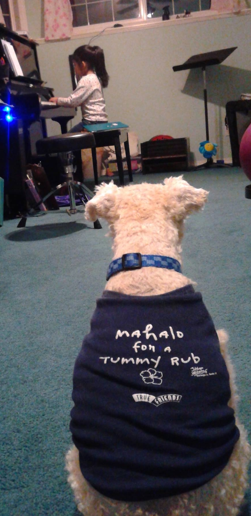 Maestro loved a good performance just as much as the next canine studio assistant.