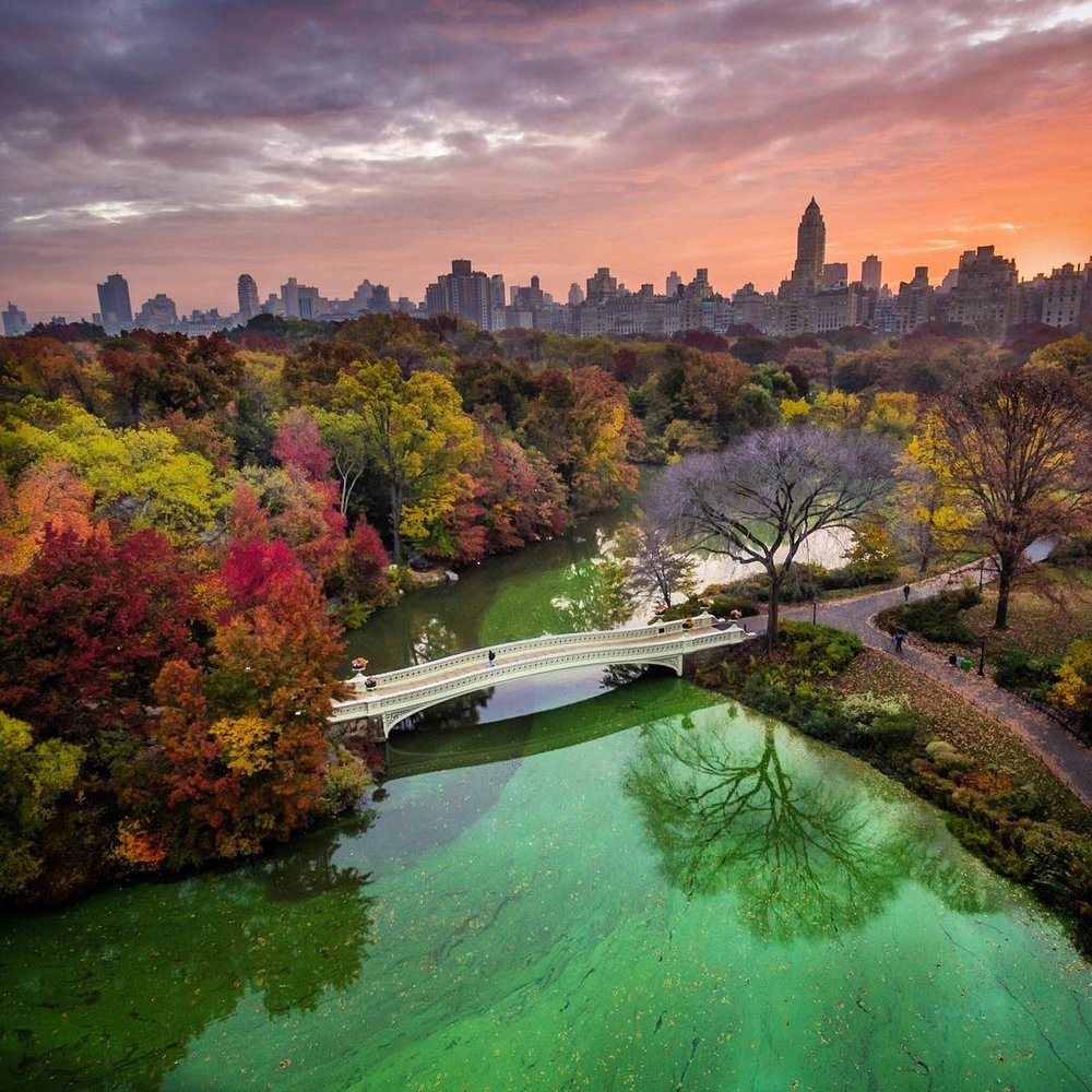 My Central Park NYC #MyCentralPark1680791592_8df55dad-69ab-4954-9968-abf08f53af5f.jpg