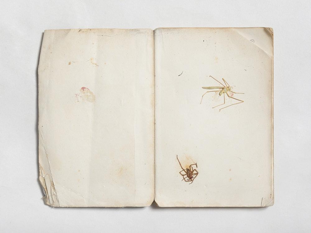 Insecta 05 [Rich Cutler].jpg