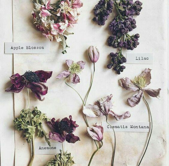 FloralWorkshop -