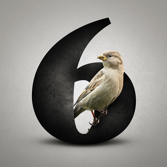 Number fun…  #typography #type #graphicdesign #design #art #branding #tee #poster #typematters #typedesign #goodtype #beauty #nature #bird #six #number #typedaily #photoshop #adobe #instaoftheday #experiment #lettering #unsplash