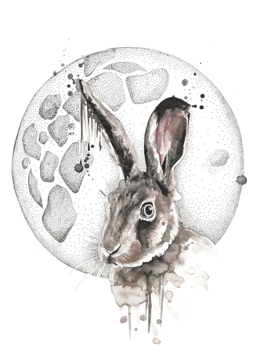 (A4)hare.jpg