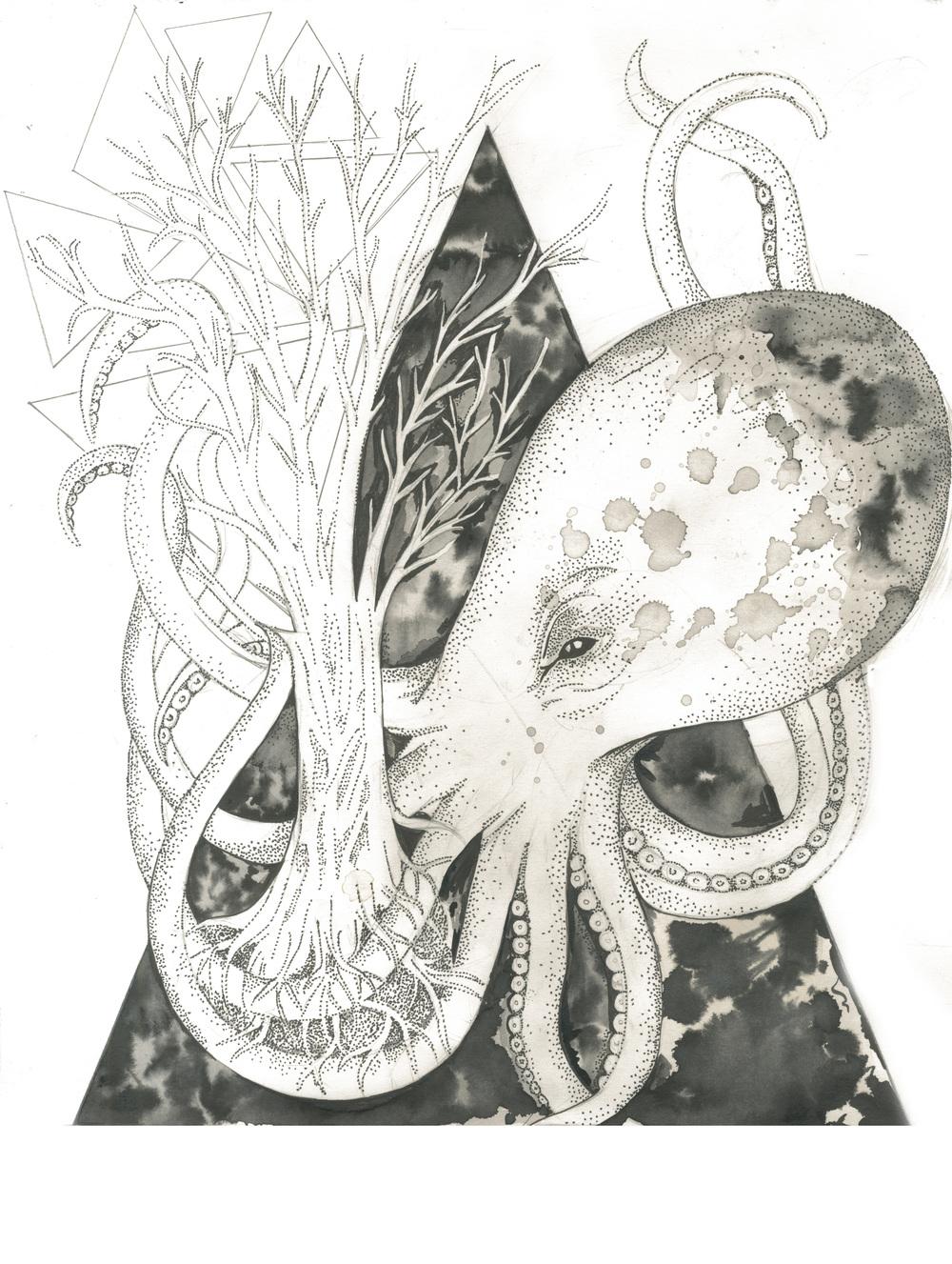octopus (fin_.jpg