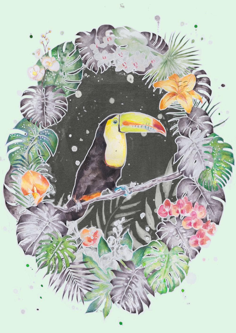 toucan large.jpg
