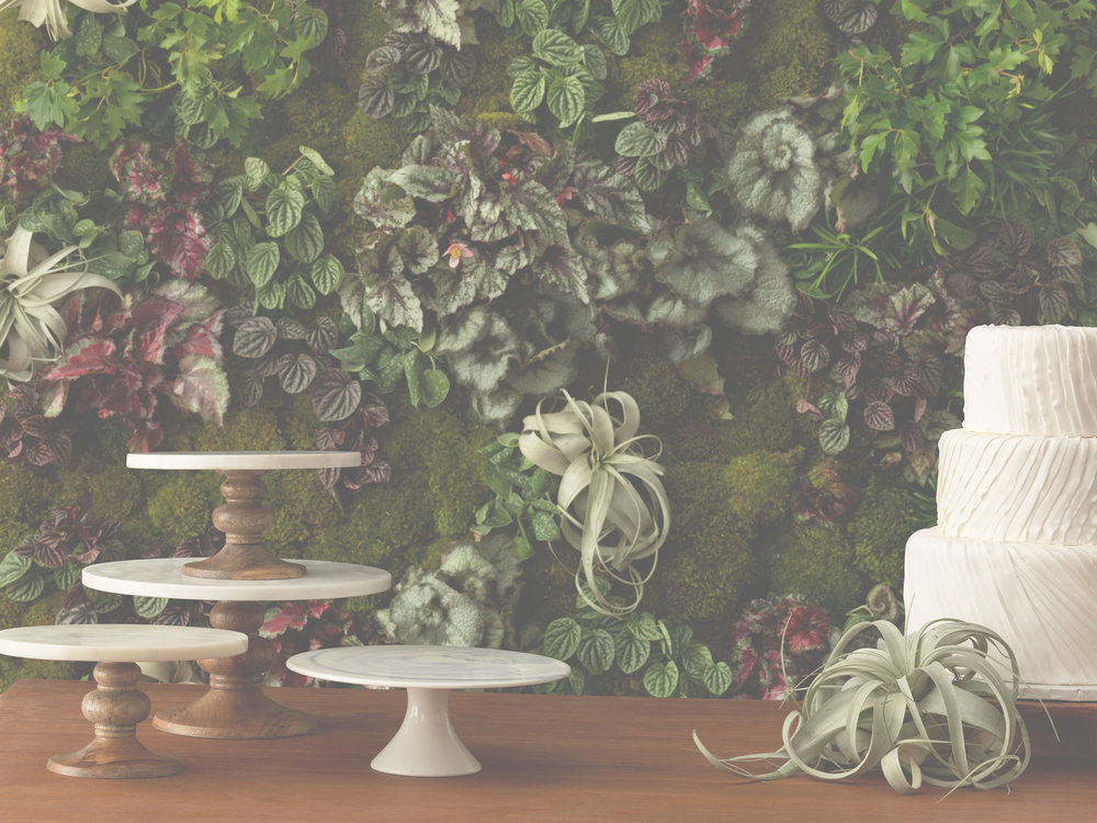 FOR BOSTON WEDDINGS MAGAZINE  SPRING/SUMMER 2017   MORE BELOW...  CAKES BY  CAKES TO REMEMBER  /  I DREAM OF JEANNE CAKES  /  JENNY'S WEDDING CAKES   FLORALS BY  POLLEN FLORAL DESIGN  /  TABLE & TULIP  /  FORET /  LES FLEURS   PHOTOGRAPHY BY /  FRANCINE ZASLOW