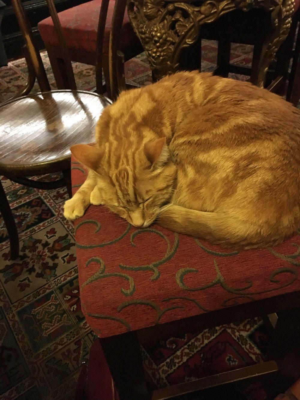 The Alex's pub cat Tommy