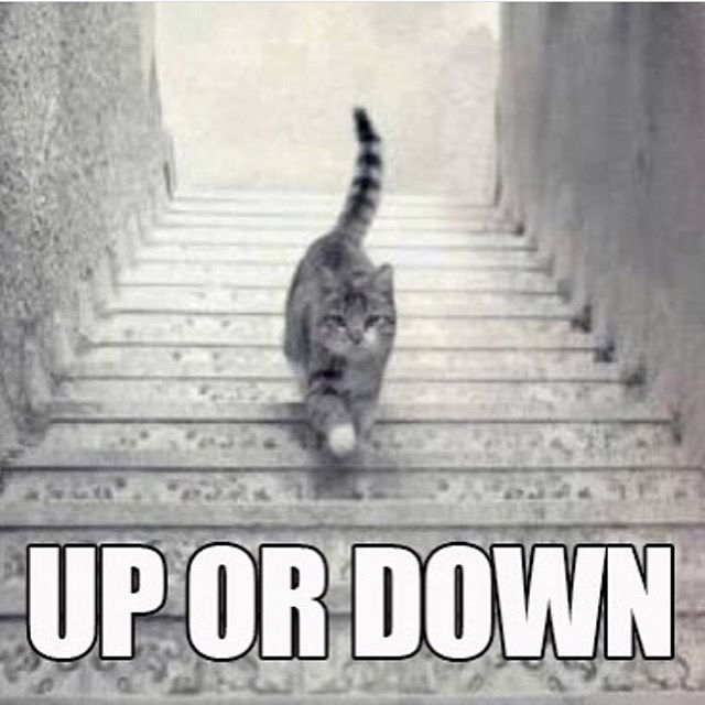 Happy Caturday! We have some openings throughout the day, reserve your room now at www.theroomvb.com #theroomvb #escaperooms #virginiabeach