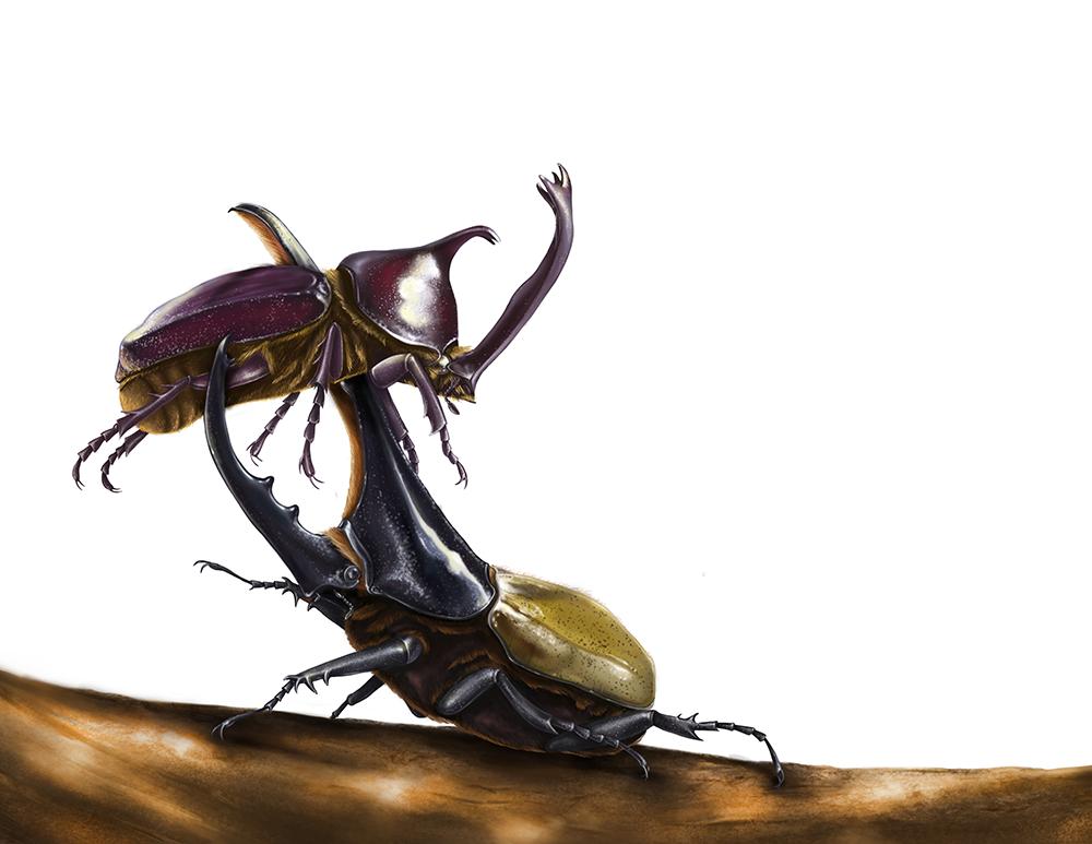 sie beetle small.png