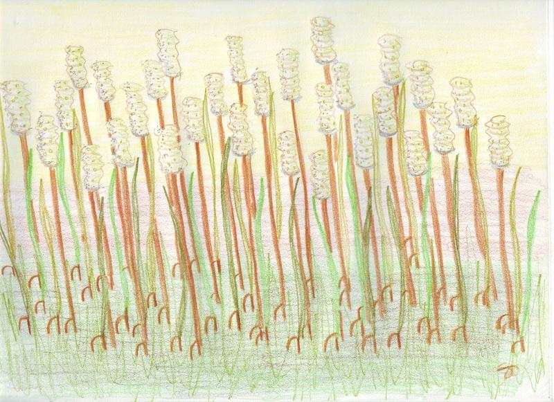 Fiber Marsh - Copy.JPG
