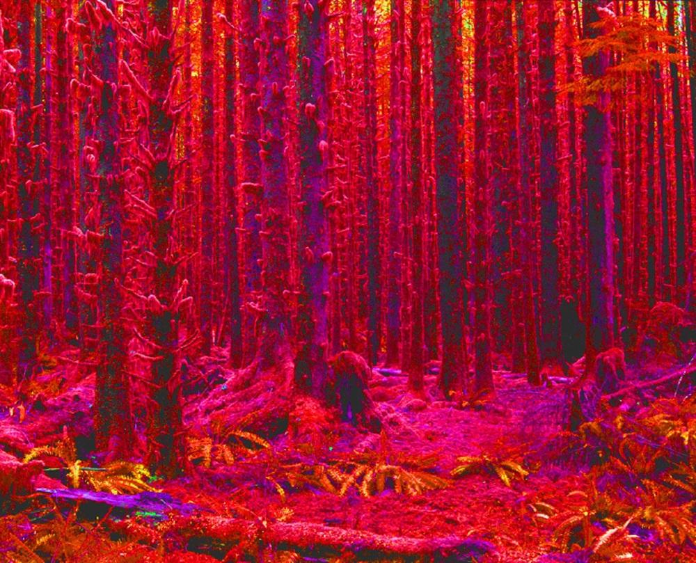 fireforest - Copy.jpg