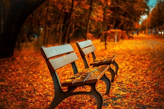 bench-forest-trees-path-medium