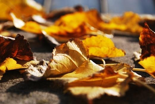 leaf-blur-leaves-ground-medium