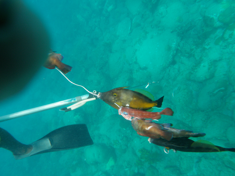 Barter: Spearfishing Lessons