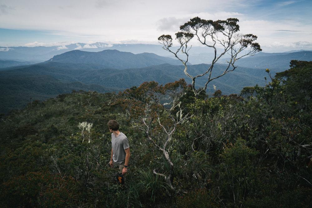 Sumatran Megatransect: Mount Kurik Maptia.com Read More